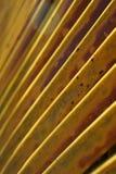 καραϊβικός φοίνικας στοκ φωτογραφία με δικαίωμα ελεύθερης χρήσης