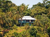 καραϊβικό ξυλοπόδαρο σπι& Στοκ Εικόνες