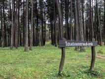 Καραϊβικό πεύκο στην περιοχή αναπαραγωγής Tonson, Chiang Mai στοκ φωτογραφίες