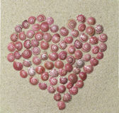 Καρδιά από τα κοχύλια Στοκ Εικόνες