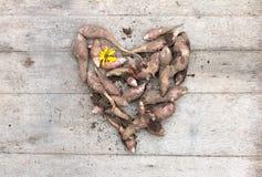 Καρδιά από τις ρίζες του φρέσκου οργανικού topinambur ή του tuberosus Helianthus αγκιναρών της Ιερουσαλήμ στο ξύλινο υπόβαθρο Δια Στοκ εικόνες με δικαίωμα ελεύθερης χρήσης