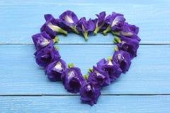 Καρδιά από το λουλούδι μπιζελιών πεταλούδων στο μπλε ξύλινο πάτωμα στοκ εικόνες με δικαίωμα ελεύθερης χρήσης