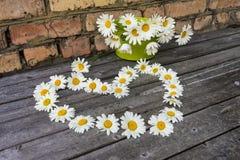 Καρδιά και ανθοδέσμη των chamomile λουλουδιών σε μια ξύλινη επιφάνεια Στοκ Εικόνες