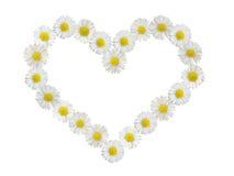 καρδιά μαργαριτών που απομονώνεται Στοκ Εικόνες
