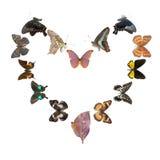 καρδιά πλαισίων πεταλούδ& Στοκ Εικόνες