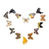 καρδιά πλαισίων πεταλούδ& Στοκ Εικόνα