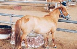καρδιά που διαμορφώνεται στο κατώτατο σημείο ενός αλόγου Στοκ εικόνες με δικαίωμα ελεύθερης χρήσης