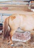 καρδιά που διαμορφώνεται στο κατώτατο σημείο ενός αλόγου Στοκ εικόνα με δικαίωμα ελεύθερης χρήσης
