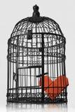 καρδιά που φυλακίζεται Στοκ Εικόνες
