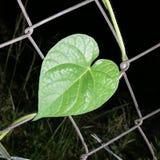 Καρδιά της φύσης στοκ φωτογραφίες με δικαίωμα ελεύθερης χρήσης