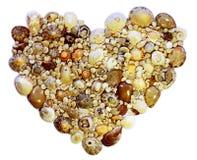 Καρδιά των κοχυλιών Στοκ Εικόνες