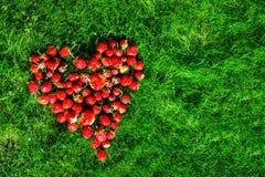Καρδιά φιαγμένη από φράουλες σε έναν πράσινο χορτοτάπητα Στοκ Εικόνες
