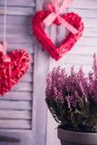 Καρδιές ινδικού καλάμου που κρεμούν άσπρα ξύλινα louvers Έννοια εορτασμού ημέρας βαλεντίνων Ανθοδέσμη λουλουδιών της Heather Στοκ Εικόνα