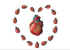 καρδιές καρδιών Στοκ Φωτογραφίες