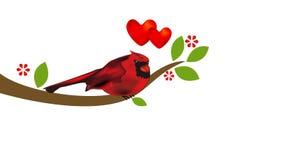 Καρδινάλιος στο δέντρο Βιντεοκλίπ μήκους σε πόδηα έννοιας βαλεντίνων καρδιών αγάπης απόθεμα βίντεο