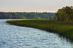 Καρελιανή λίμνη με την άκρη του δάσους Στοκ Φωτογραφίες