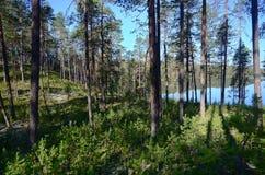 Καρελιανός ποταμός Στοκ Φωτογραφίες