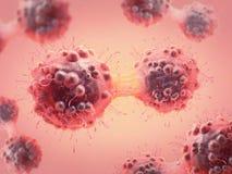 Καρκινικό κύτταρο στο στάδιο mitosis ελεύθερη απεικόνιση δικαιώματος