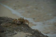 Καρκινοειδής άμμος Zanzibar Τανζανία θάλασσας καβουριών ζωική ωκεάνια στοκ φωτογραφίες