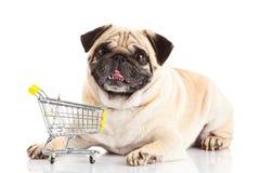 Καροτσάκι αγορών σκυλιών pugdog που απομονώνεται στο άσπρο υπόβαθρο Αγοραστής Στοκ Εικόνες