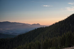 Καρπάθια δάση Στοκ φωτογραφία με δικαίωμα ελεύθερης χρήσης