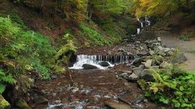 Καρπάθια βουνά Ποταμός βουνών στο δάσος στην πτώση φιλμ μικρού μήκους