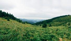Καρπάθια κορυφαία όψη βουνών στοκ εικόνες με δικαίωμα ελεύθερης χρήσης