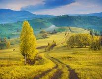 Καρπάθιοι λόφοι βουνών που καλύπτονται με την κίτρινη χλόη φθινοπώρου στοκ φωτογραφία με δικαίωμα ελεύθερης χρήσης