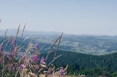 Καρπάθιο καλοκαίρι βου& Βουνό Berkut Zakhar Στοκ Φωτογραφία