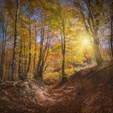 Καρπάθιο φθινόπωρο forest_4 στοκ εικόνες