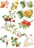 καρποί λουλουδιών ώριμο διανυσματική απεικόνιση