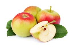 Καρποί μήλων με την αποκοπή στοκ εικόνα