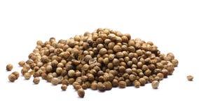 Καρποί σπόρων κορίανδρου Coriandrum sativum, πορείες Στοκ Φωτογραφία