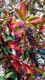 Καρποί του φθινοπώρου Στοκ Φωτογραφία