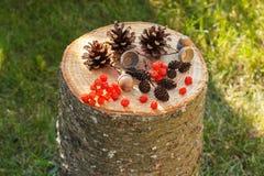 Καρποί φθινοπώρου του δάσους στο ξύλινο κολόβωμα στον κήπο Στοκ εικόνα με δικαίωμα ελεύθερης χρήσης