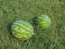 Καρπούζια στον πράσινο χορτοτάπητα στοκ φωτογραφίες