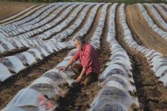 Καρπούζι ή πεπόνι που φυτεύει στον τομέα και τον αγρότη στοκ εικόνες
