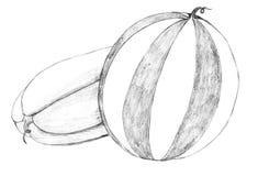 καρπούζι μολυβιών σχεδίω Στοκ Εικόνα