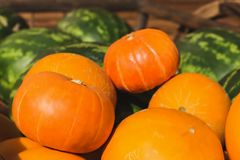 Καρπούζι πεπονιών κολοκύθας φρούτων και λαχανικών Στοκ Φωτογραφίες
