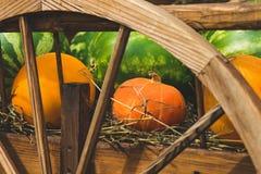 Καρπούζι πεπονιών κολοκύθας φρούτων και λαχανικών Στοκ Εικόνες