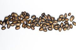 καρπούζι σπόρων Στοκ Φωτογραφία