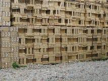 καρπός κλουβιών Στοκ εικόνα με δικαίωμα ελεύθερης χρήσης