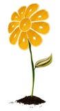 καρπός λουλουδιών Στοκ φωτογραφία με δικαίωμα ελεύθερης χρήσης