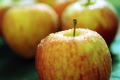 καρπός μήλων Στοκ Φωτογραφία
