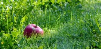 Καρπός της Apple Στοκ φωτογραφία με δικαίωμα ελεύθερης χρήσης