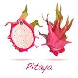 Καρπός Pitaya ή δράκων διάνυσμα Στοκ Εικόνες