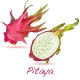 Καρπός Pitaya ή δράκων διάνυσμα Στοκ Φωτογραφίες