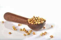 Καρυκεύματα κορίανδρου στο ξύλινο κουτάλι στοκ εικόνες με δικαίωμα ελεύθερης χρήσης
