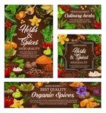 Καρυκεύματα, μαγειρικά χορτάρια και φρέσκα καρυκεύματα τροφίμων διανυσματική απεικόνιση