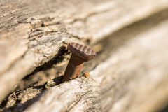 Καρφί που σφυρηλατείται σε ένα δέντρο Στοκ φωτογραφία με δικαίωμα ελεύθερης χρήσης